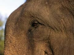 Wild Elephant Dies At Construction Site In Assam