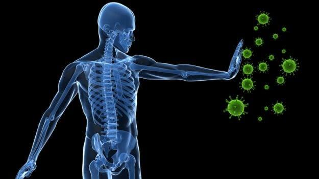 immune system 625