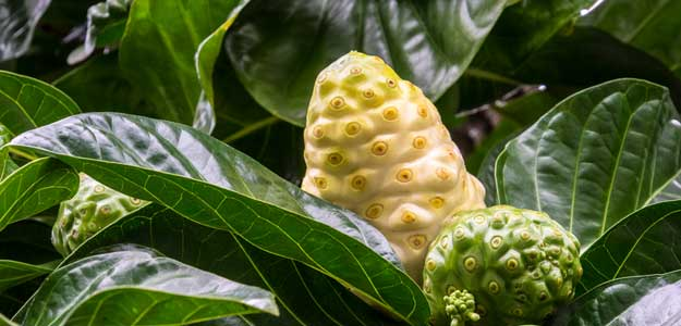 Post The Festival Season, Detoxify Your Body With Noni Juice
