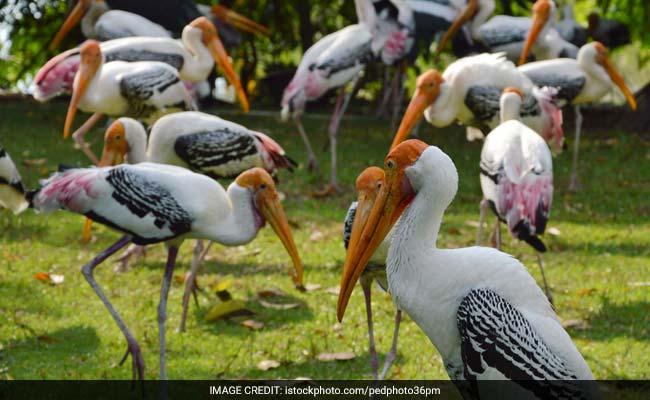 Delhi Zoo Records 500 Local Migratory Stork Births Amid Bird Flu Scare