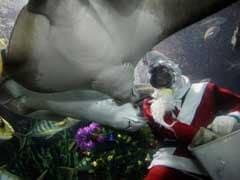 Singapore Aquarium Diver Killed In Stingray Attack