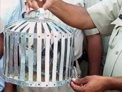Pigeon With 'Message' For PM Modi Taken Into Custody In Punjab