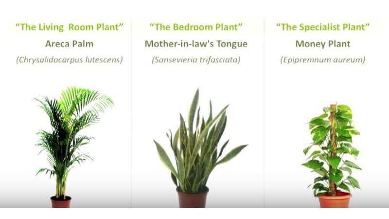 वायु प्रदूषण से बचने के उपाय: ये पौधे देंगे शुद्ध और फिल्टर की हुई हवा
