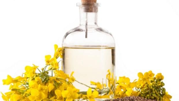 Canola Oil With Omega-3 May Cut Heart Disease Risk: Study