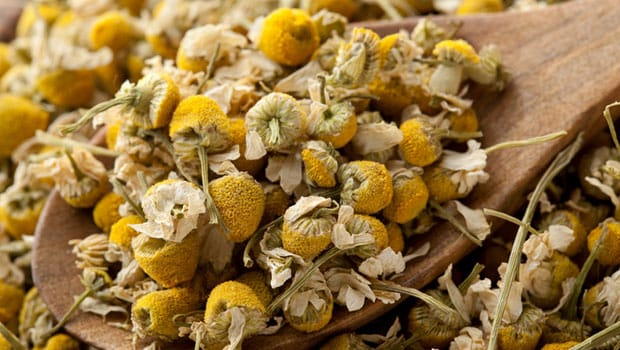 13 Benefits Of Chamomile Tea For Skin Hair And Overall