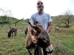 Montenegro's Shunned Donkey's Milk New Health Trend