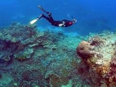 UNESCO Leaves Great Barrier Reef Off 'In Danger' List