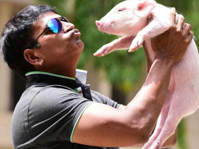 Ravi Babu Joins Bank Queue With His Adhugo Co-Star, A Piglet