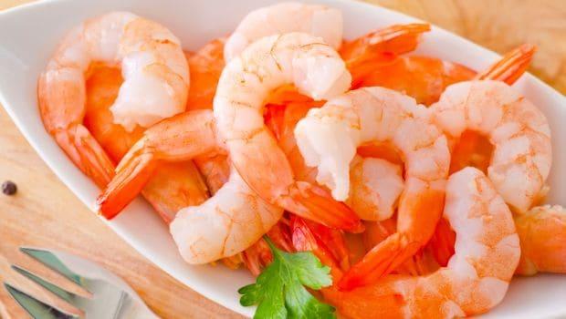 shrimp 620