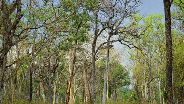 Trees Benefit India, Pakistan, Bangladesh Most in Air Pollution Reduction