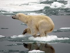 The Arctic Is 'Behaving So Bizarrely'