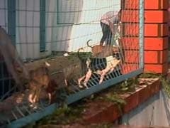 In Chennai, Shelter With 1,800 Animals Damaged By Cyclone Vardah