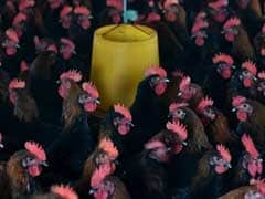 Amid Bird Flu Threat, China's Wuxi City To Suspend Poultry Trade