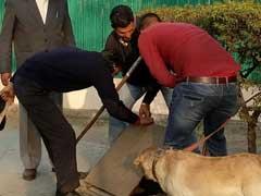 नजीब की तलाश : खोजी कुत्तों और 600 पुलिस कर्मियों ने जेएनयू का चप्पा-चप्पा छाना