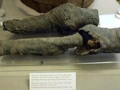 Egyptian Queen Nefertari's Mummified Legs From 13th Century BC Identified