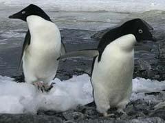 चिड़ियाघर के लिए पेंगुइन खरीदने की जांच एसआईटी से कराने की मांग