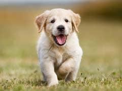 OMG: कुत्ते को भौंकने से रोका तो मिली 5 साल जेल की सजा