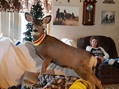 Game Wardens In Kansas Killed A Deer In Front Of The Family That Kept It As A Pet
