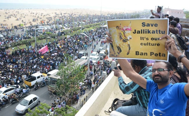 jallikattu marina beach protests 650 afp new