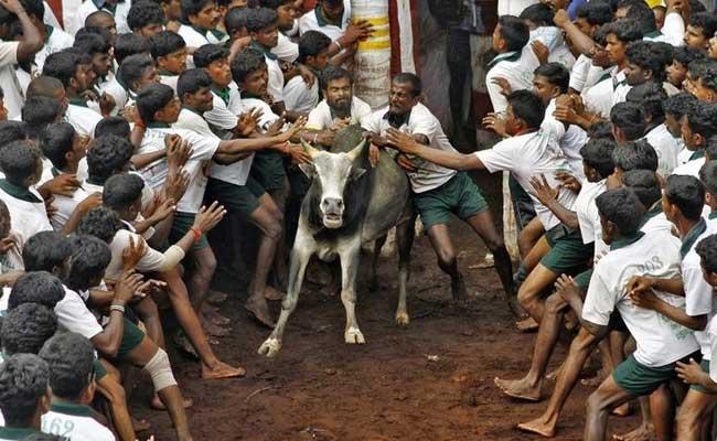 Jallikattu: PETA Seeks Tamil Nadu Minister's Support To Repeal An Act