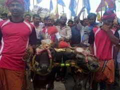 कर्नाटक में भैंसों की दौड़ 'कंबला' पर प्रतिबंध हटाने की मांग, प्रदर्शनकारी गिरफ्तार