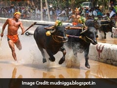 Buffalo Race To Continue In Karnataka, Says Supreme Court