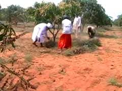 In Tamil Nadu, Sikh Farmers Turn Barren Land Into Orchards