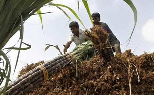 Government May Allot Rs 500 Crore For Sugar Development Fund: Report