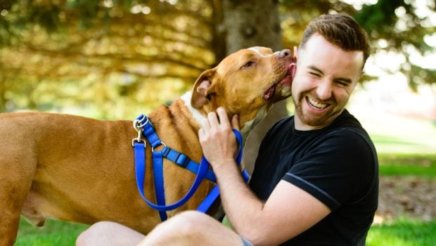 Should You Let Your Dog Lick You?