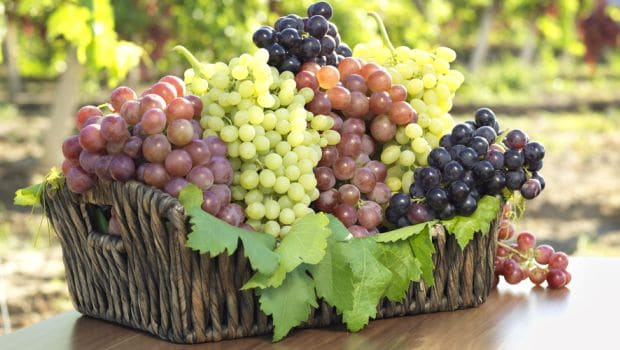 The Different Types of Grapes for Eating & Making Wine