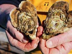 On This Valentine's, Surprise Your Beloved With A Tasty Offering: A Heart-Shaped Oyster