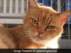 If Cats Were Therapists? It's As Hilarious As It Sounds