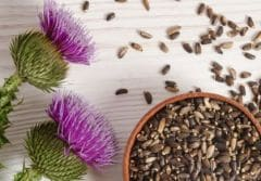 7 Amazing Benefits of Milk Thistle: For Strong Immunity & Better Digestion