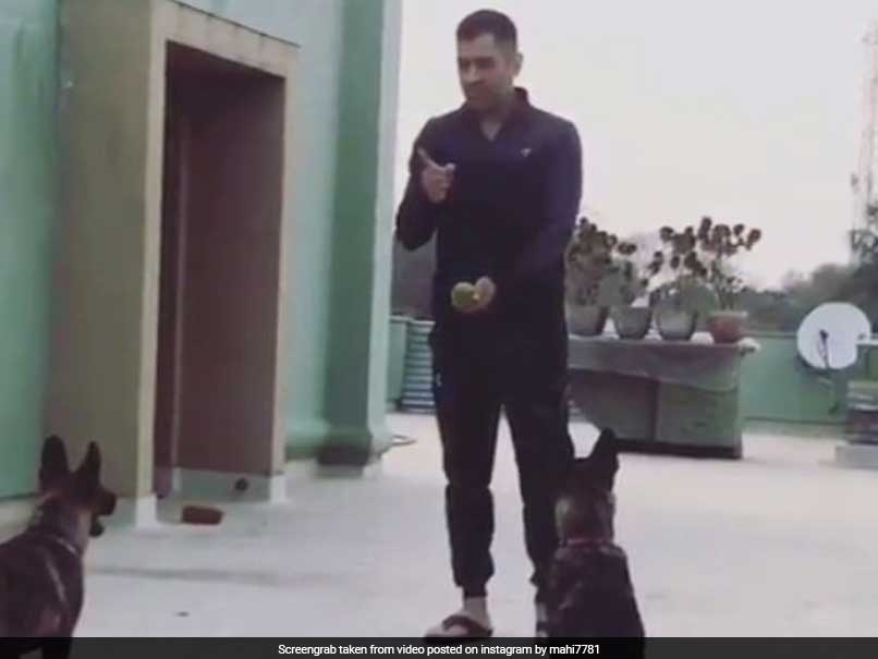 MS Dhoni Enjoys Time Away From Cricket, Plays Catch With His Dogs