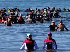 New Zealand Rescuers Form Human Chain To Help Stranded Whales