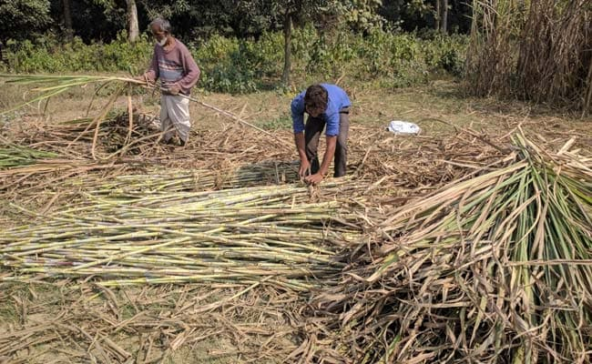 Cabinet Approves Rs 8,500-Crore Bailout Package For Sugar Sector: Sources