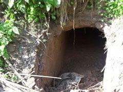 जम्मू-कश्मीर : BSF ने पाकिस्तान की ओर से बनाई गई 20 फीट की सुरंग का पता लगाया