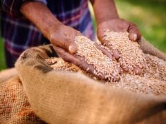 Government Increases Minimum Support Prices For Rabi Crops