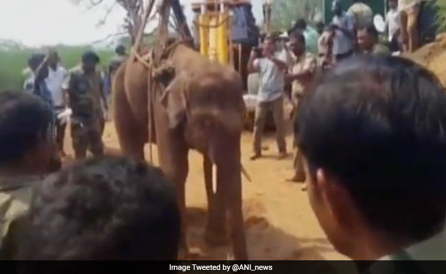 How Tamil Nadu Baby Elephant Was Rescued From 70-Foot Well