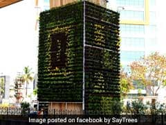 Bengaluru Gets Vertical Garden To Fight Pollution, All Thanks To Its Residents