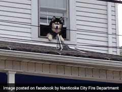 Dog Crawls Out Of Window, Had To Be Rescued Twice In One Hour