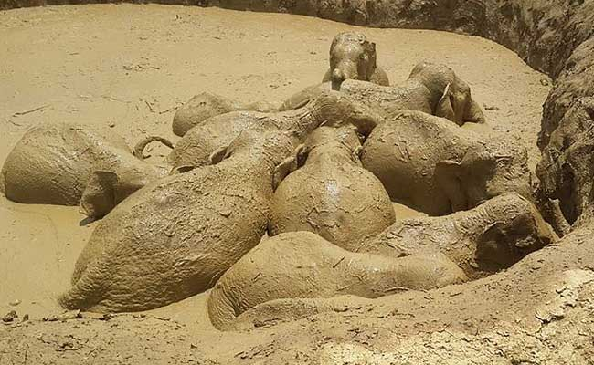 How 11 Elephants Were Rescued From A Giant Flooded Crater In Cambodia
