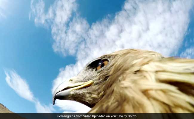 Watch: Eagle Strapped With Camera Hunts Fox In This Intense Video