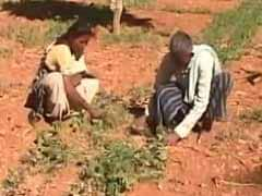Karnataka Drought: 7 Borewells, But This Family Struggles To Grow Vegetables