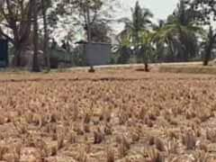 Central Team Assesses Damage Caused To Rabi Crop Due To Drought In Karnataka