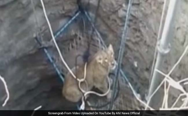 Watch: How Villagers In Gujarat Rescued A Lioness Trapped In A Dry Well