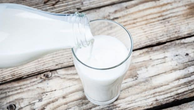 Raw milk diet for weight loss