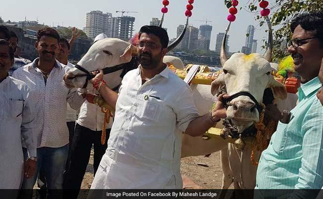 BJP Legislator Mahesh Landge Rides Bullock Cart To Vidhan Bhawan In Maharashtra
