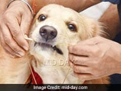 Mumbai Owners Bequeath 5-Crore Wealth To Their Pair Of Golden Retrievers