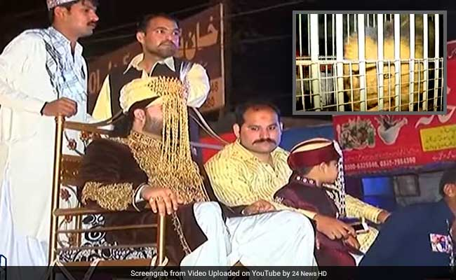 No Ghodi Or Gaadi, This Groom Arrived On A Caged Lion